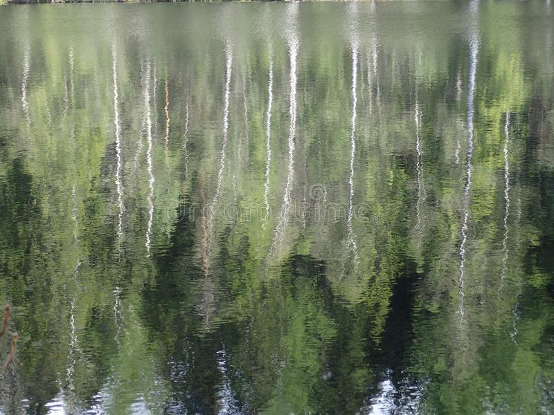 Reflection, Water, Green, Nature royalty free stock image