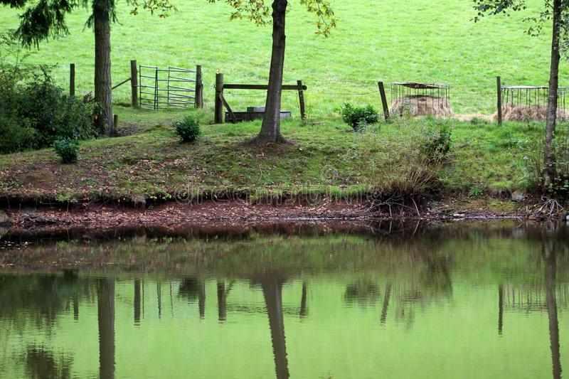 Reflection, Water, Nature, Green royalty free stock photos