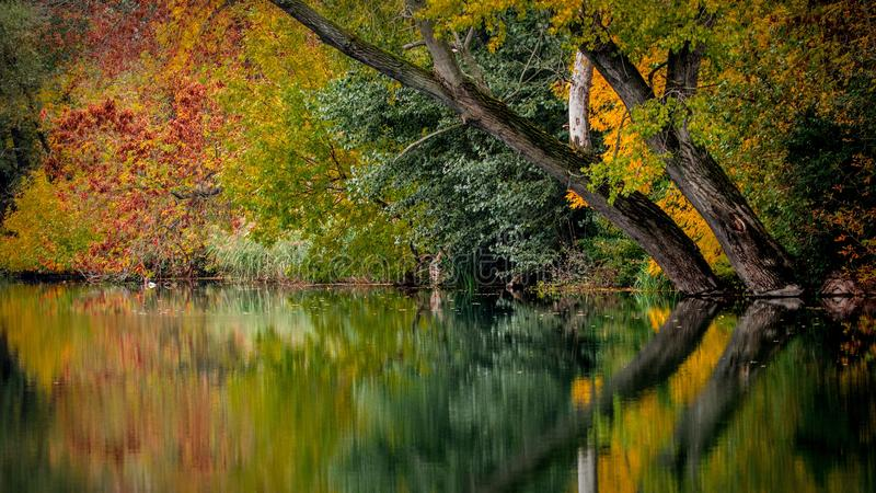Reflection, Water, Nature, Leaf royalty free stock image