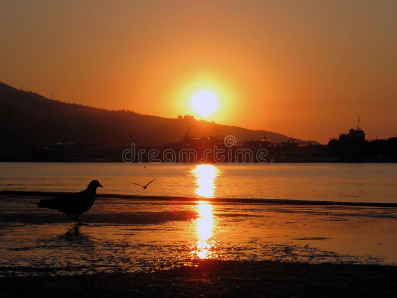 Reflection of water, sea beach and bird stock photography