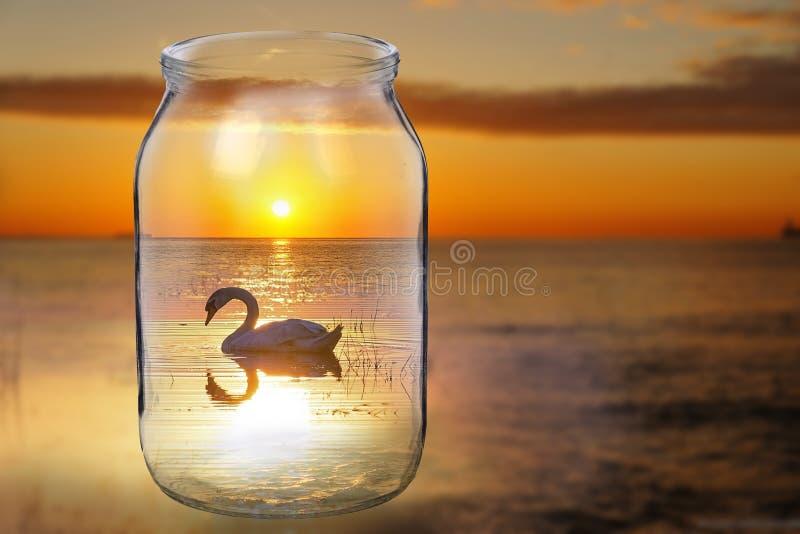 Reflection, Water, Sunset, Stock Photography stock photos