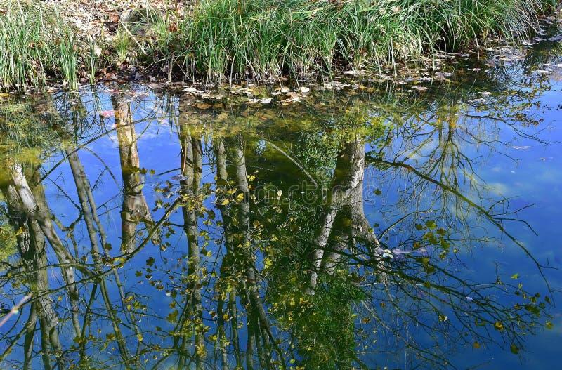 Reflection, Water, Vegetation, Wetland Free Public Domain Cc0 Image