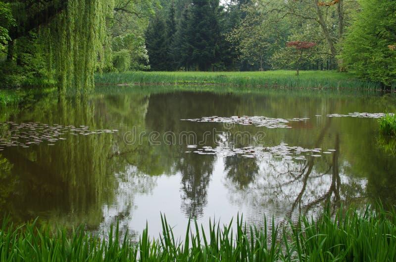 Reflection of willon in lake. Near castle Slatinany, Czech Republic royalty free stock photography