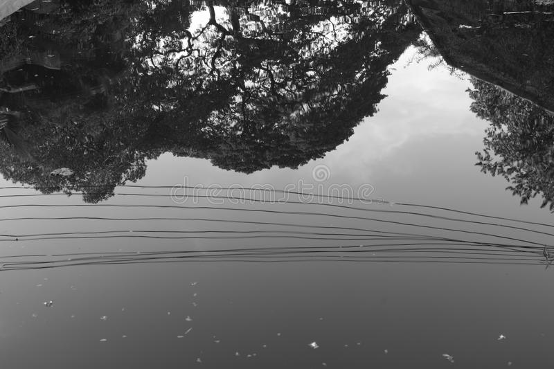 A reflection of wires and tree in water. stock image