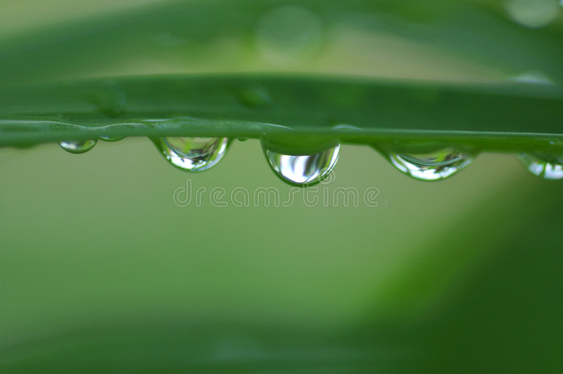 Download Reflections stock image. Image of close, morning, plant - 55707