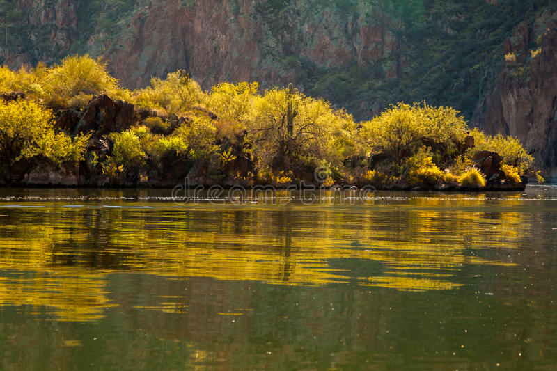 Reflections of Blooming Palo Verde Trees On An Arizona Lake. Reflections of blooming palo verde trees on Saguaro Lake in Arizona. The trees are on a bank in stock images