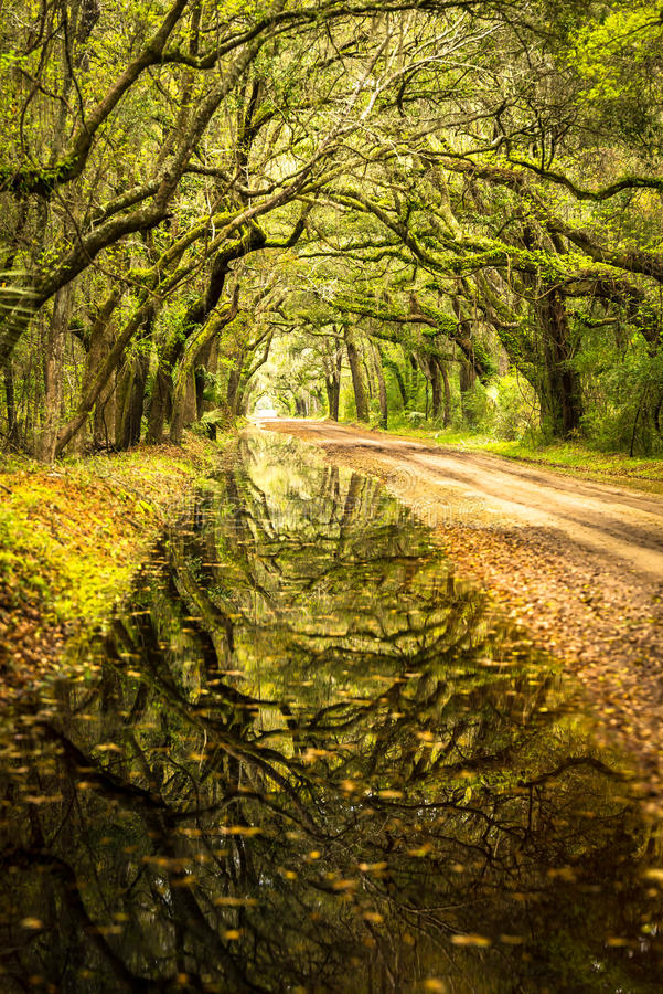 Reflections of Botany Bay. Recent flooding rains in the low country covered Botany Bay road leading to this stunning reflection of the trees in the water stock image