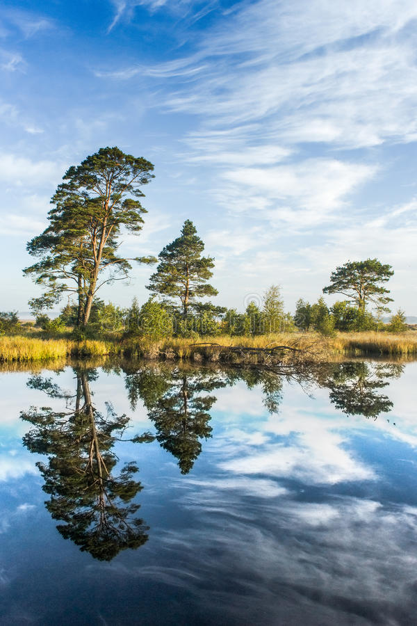 Download Reflections On A Calm Swamp Lake Stock Image - Image: 34584531