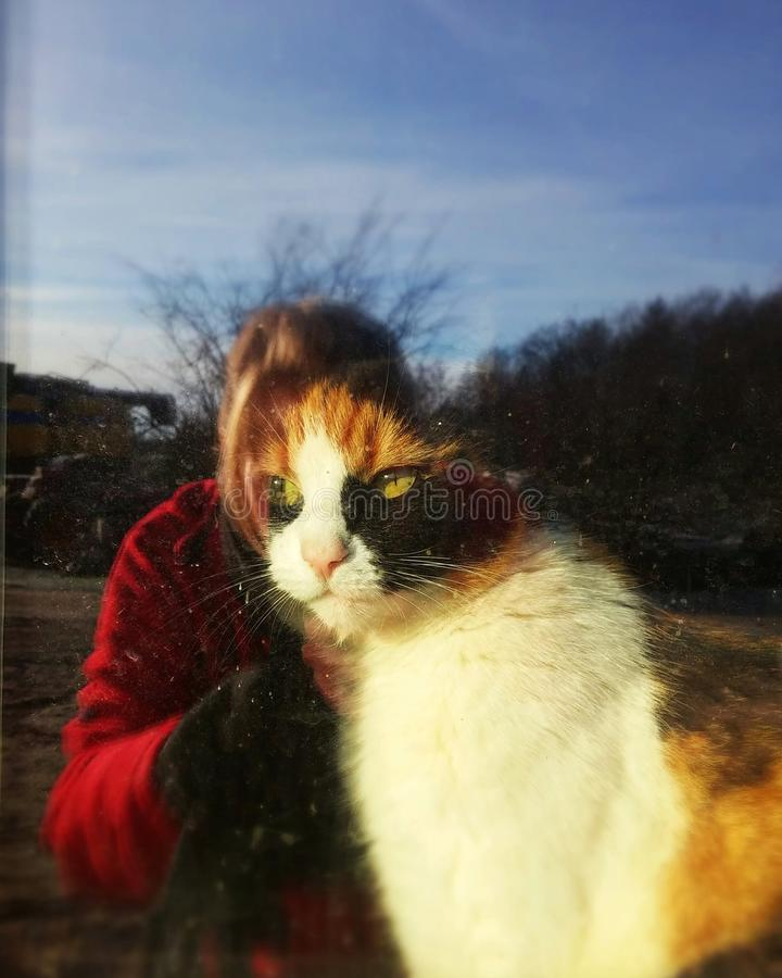 Reflections. Cat women. Melting together. Women and a cat royalty free stock images