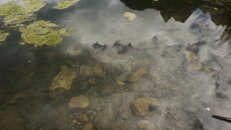 Reflections in the creek royalty free stock photography
