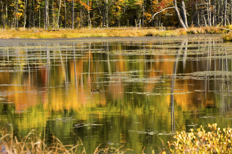 Reflections of fall foliage on water in New Hampshire. stock photos