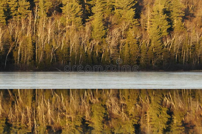 Trees And Ice, Connery Pond, Adirondack Forest Preserve, New York USA. Reflections and ice on Connery Pond In the Adirondack Mountains Of New York State royalty free stock image
