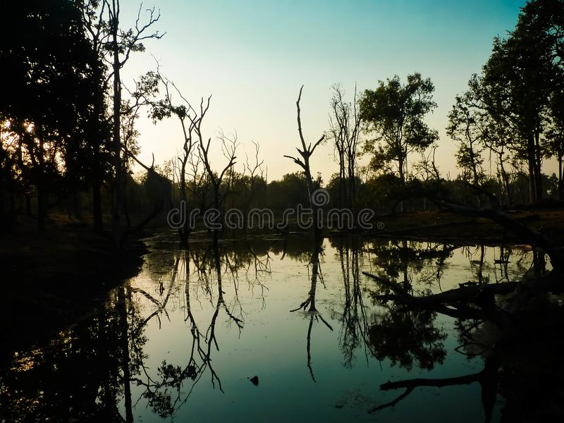 Reflections of the jungle stock photography