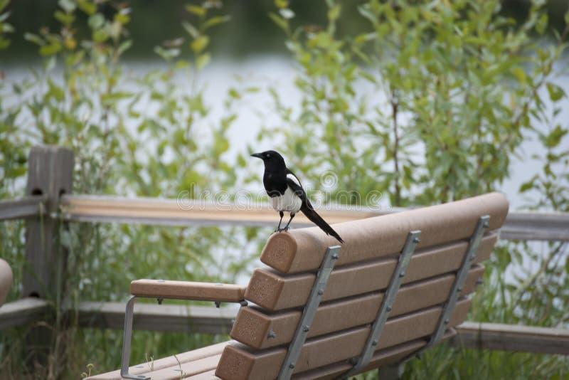 Download Reflections Lake Palmer Alaska Stock Image - Image of magpie, flats: 56619683