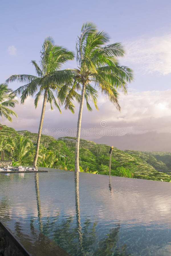 Reflections of palm trees in the pool. royalty free stock photo