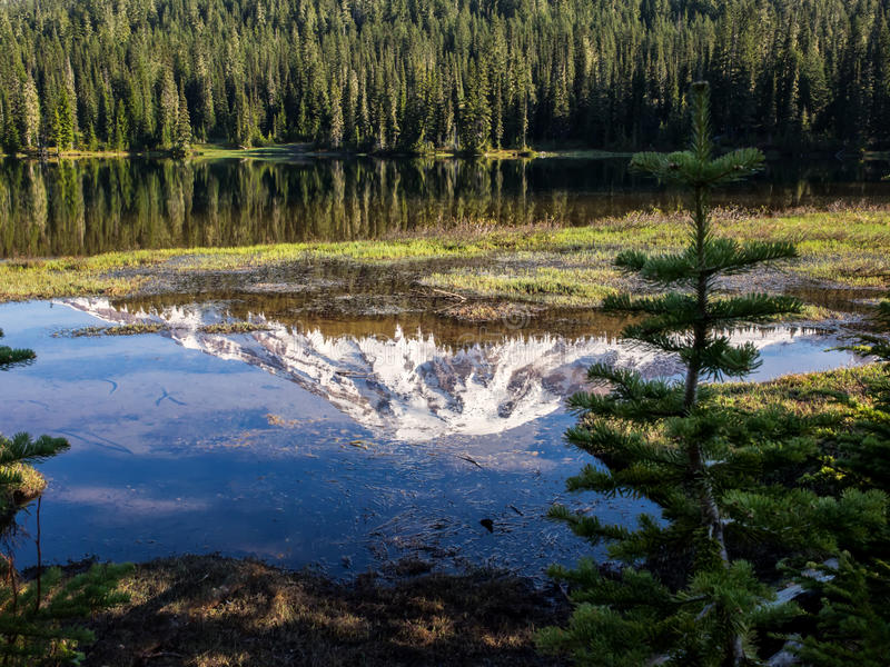 Reflections in a still lake in the mountains royalty free stock image