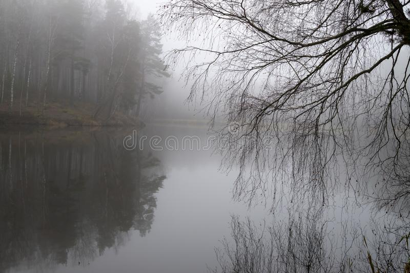 Reflections on a tranquil lake with autumn mist. Viewed past the branches of a tree in a serene atmospheric landscape stock images