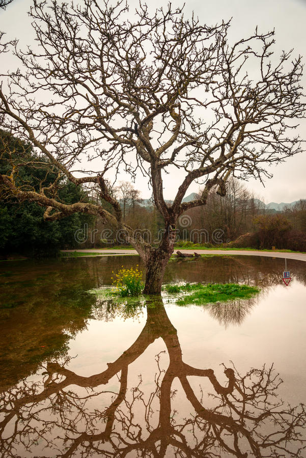 Reflections on water. Reflection of a tree over a puddle formed by the recent rain stock image