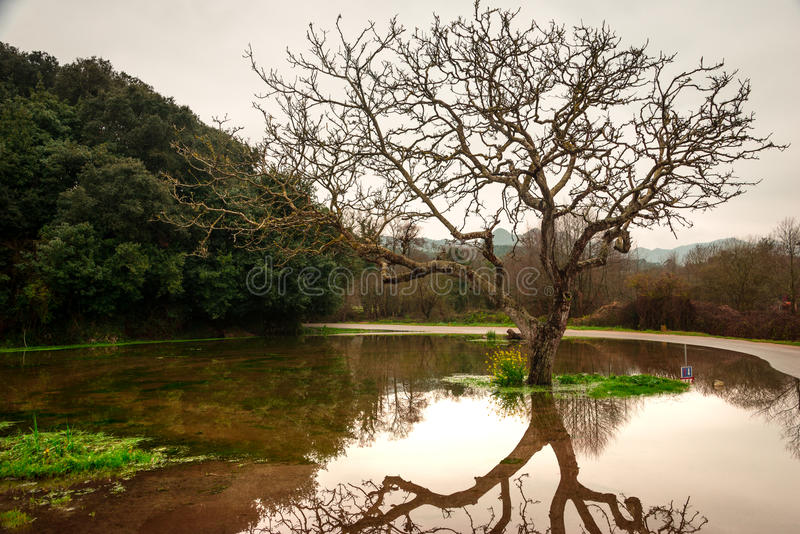 Reflections on water. Reflection of a tree over a puddle formed by the recent rain royalty free stock images