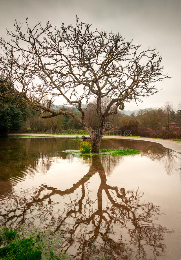 Reflections on water. Reflection of a tree over a puddle formed by the recent rain stock photo