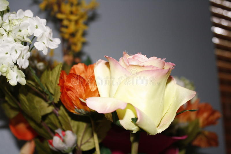 Reflective roses royalty free stock image
