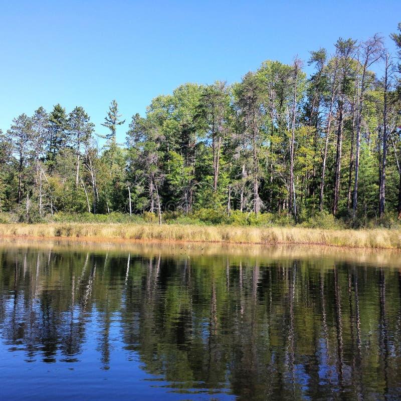 Reflective tree stock photos