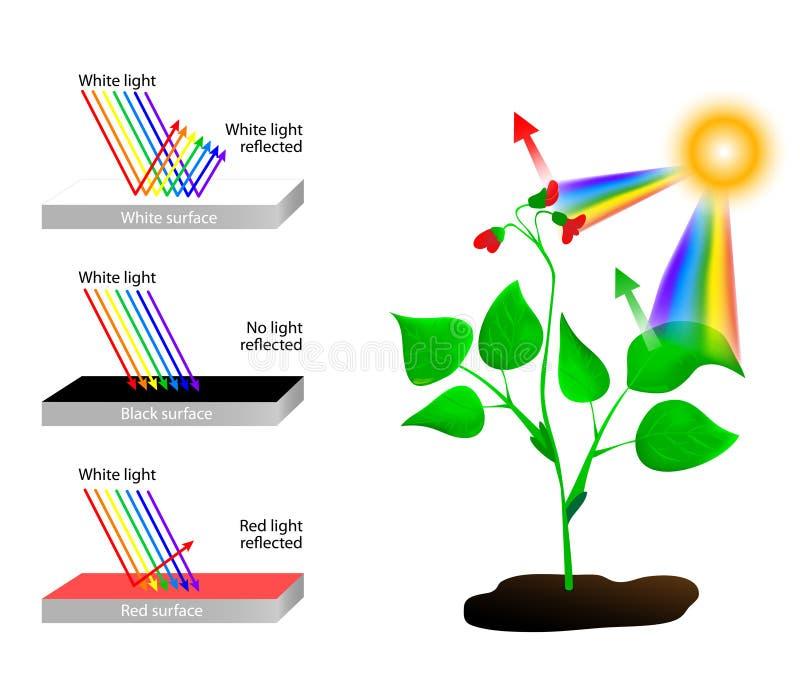 Refleja y absorbe Espectro de colores y de Sunli libre illustration