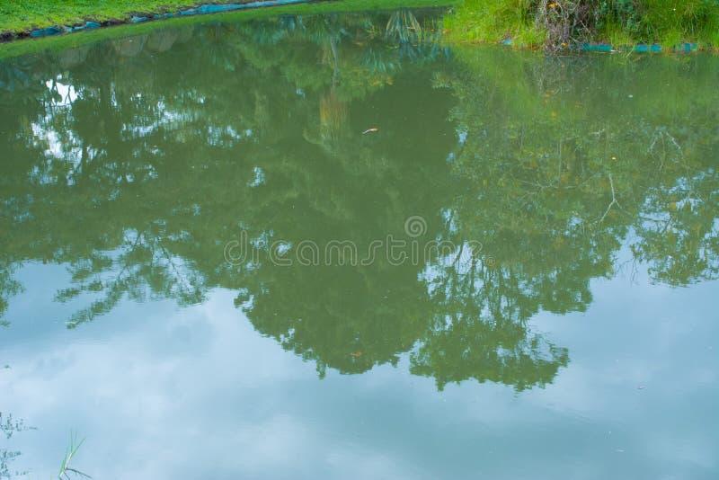 Refleje en el agua del lago imagen de archivo libre de regalías