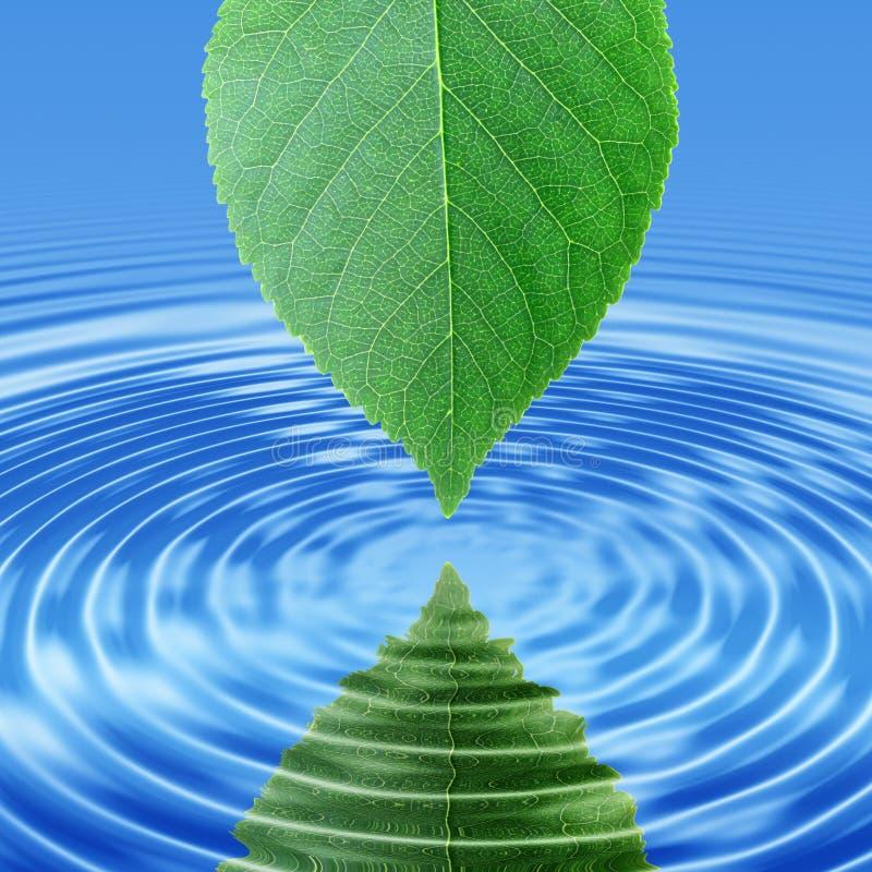 Refleje la hoja verde en agua azul fotos de archivo libres de regalías