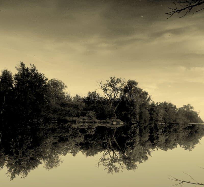 Reflekterande sommarflod royaltyfri foto