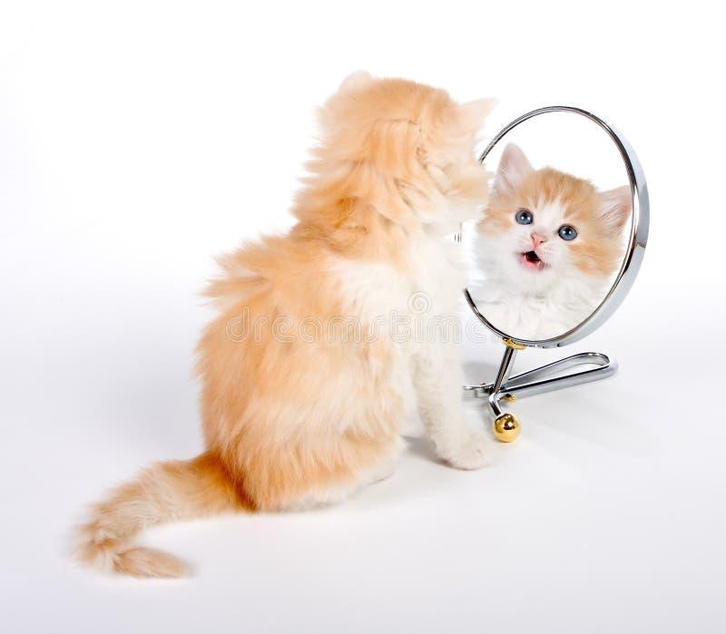 Reflektiertes Kätzchen lizenzfreie stockbilder