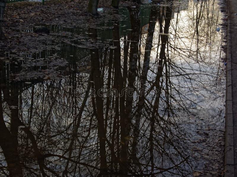 Reflektion av träd i en puddle på vårmorgonen arkivbild