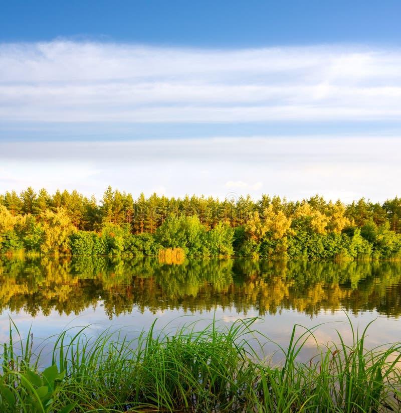 Reflexão agradável da água com floresta do outono imagem de stock