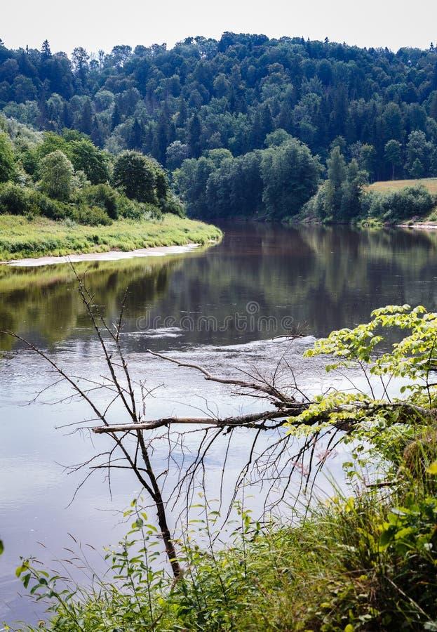Reflexão bonita da floresta no rio foto de stock royalty free