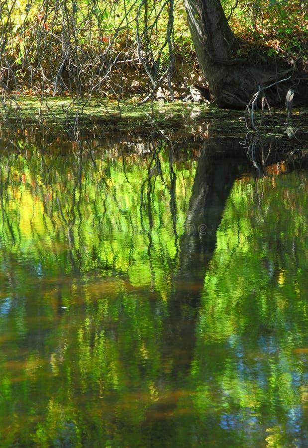 Reflexão da água no outono fotografia de stock