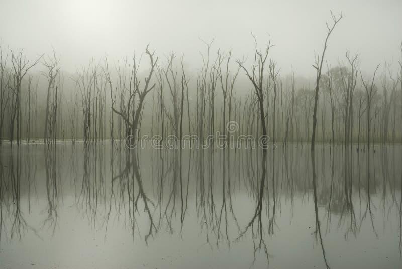 Reflexão da árvore imagens de stock royalty free