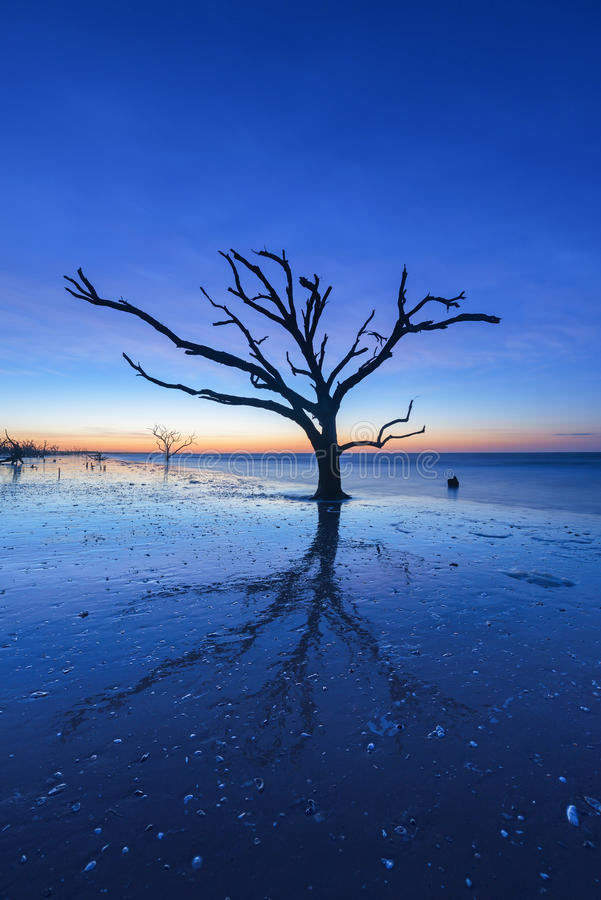 Reflexão da árvore na hora azul imagem de stock royalty free