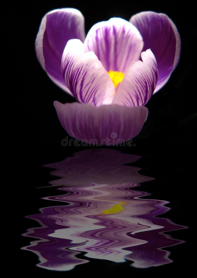 Reflexão da flor imagem de stock royalty free