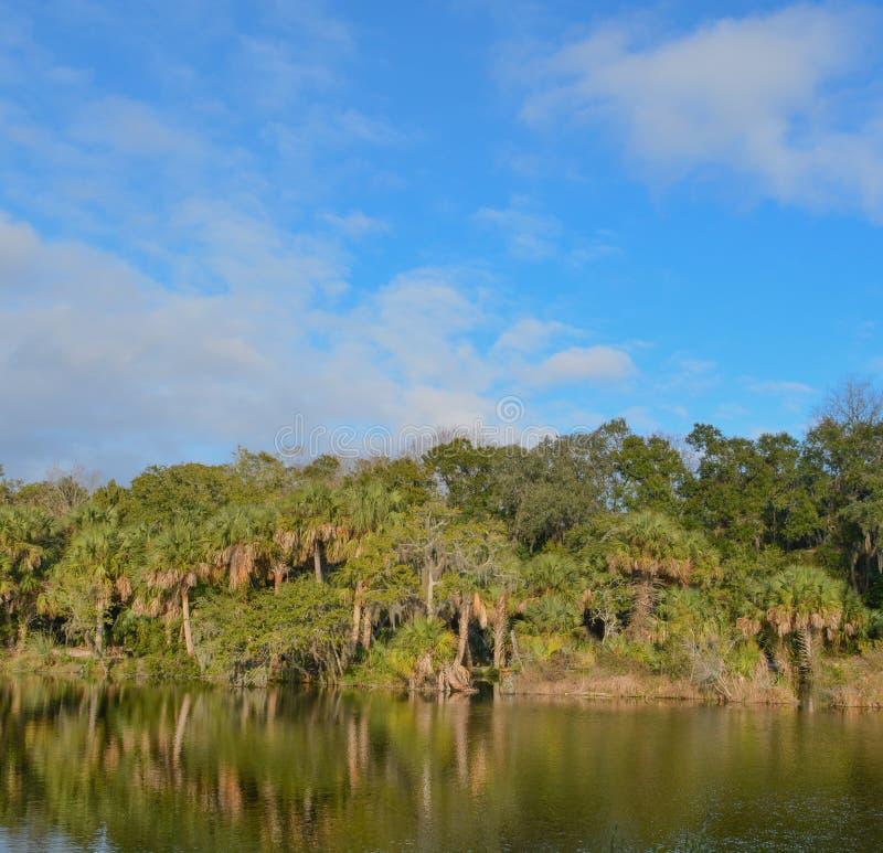 Reflexão da linha costeira em Kathryn Abbey Hanna Park, o Condado de Duval, Jacksonville, Florida imagem de stock