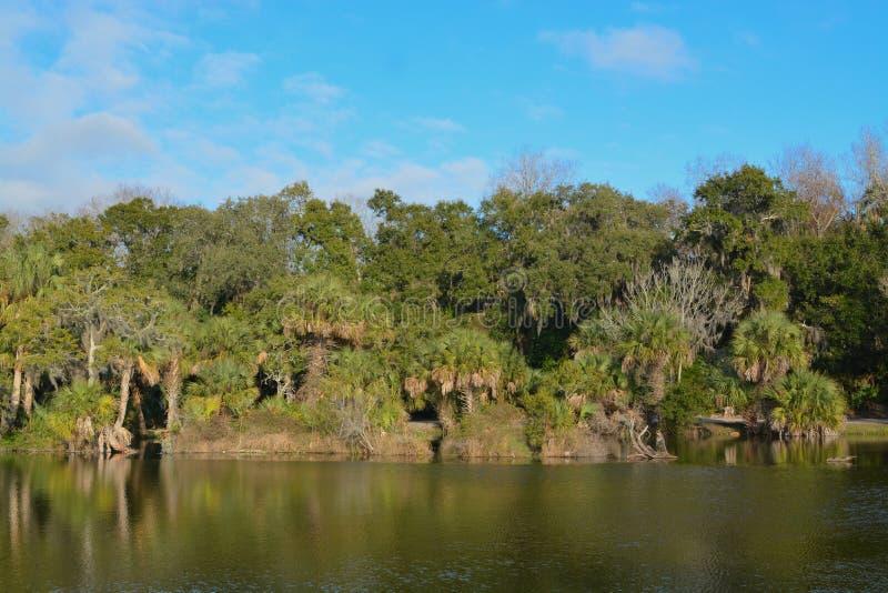 Reflexão da linha costeira em Kathryn Abbey Hanna Park, o Condado de Duval, Jacksonville, Florida imagem de stock royalty free