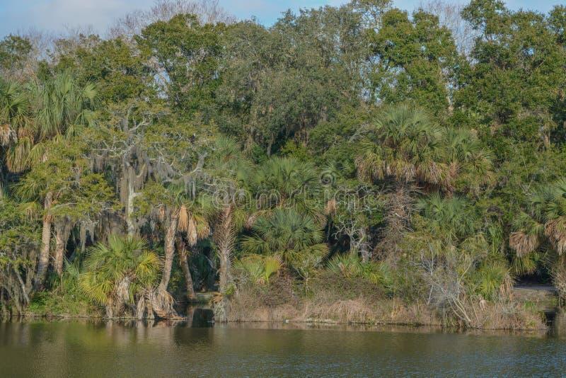 Reflexão da linha costeira em Kathryn Abbey Hanna Park, o Condado de Duval, Jacksonville, Florida fotos de stock