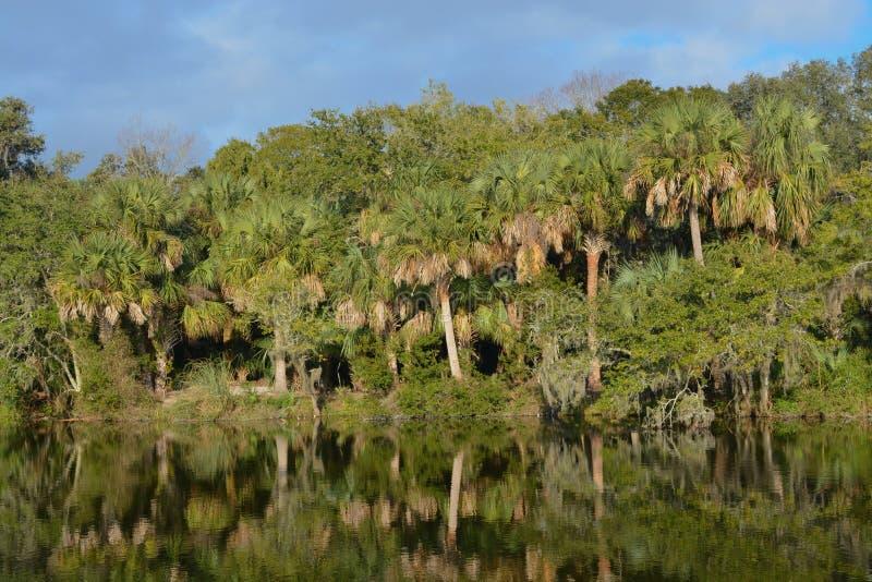 Reflexão da linha costeira em Kathryn Abbey Hanna Park, o Condado de Duval, Jacksonville, Florida imagens de stock royalty free