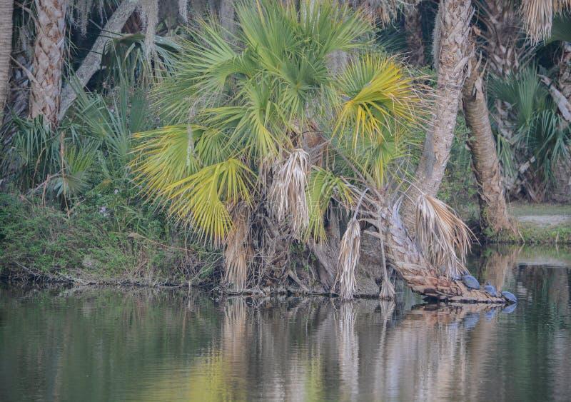 Reflexão da linha costeira em Kathryn Abbey Hanna Park, o Condado de Duval, Jacksonville, Florida fotos de stock royalty free