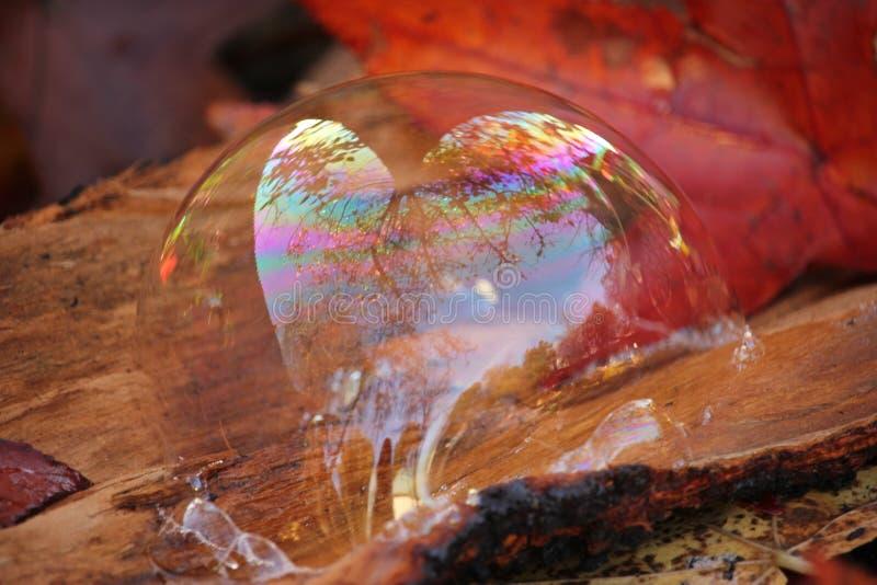 Reflexão dada forma da natureza da bolha de sabão coração abstrato imagem de stock