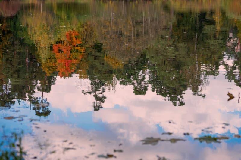 Reflexão das árvores coloridas brilhantes cênicos diferentes do outono Queda, paisagem no parque velho Caminhada, humor, conceito fotografia de stock