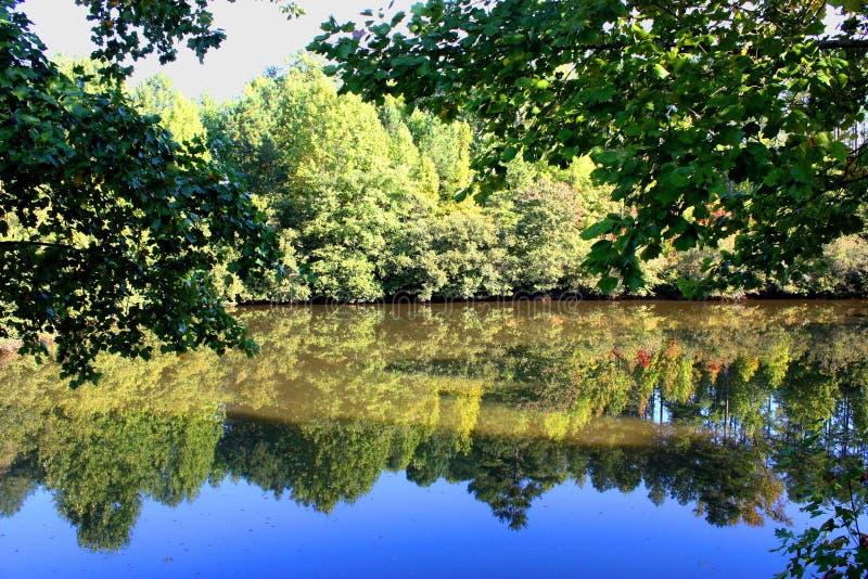 Reflexão das árvores do verão fotografia de stock royalty free