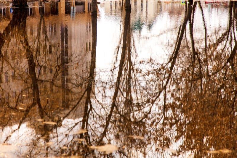 Reflexão das árvores na água na mola adiantada imagem de stock