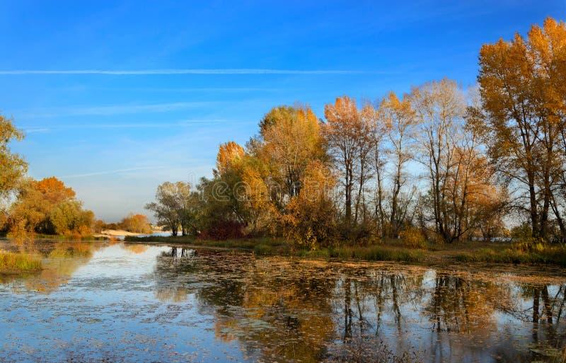 Reflexão das árvores na água no outono fotos de stock royalty free
