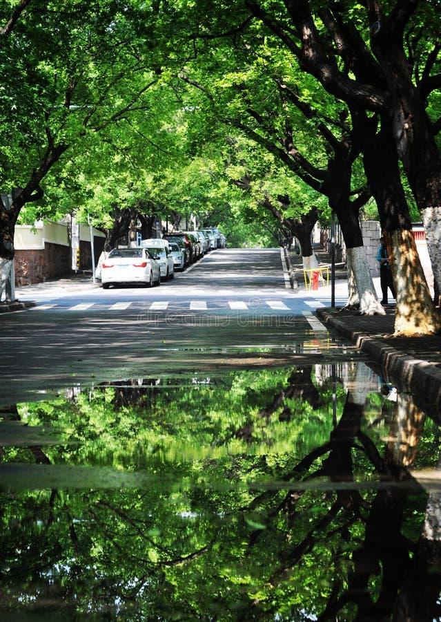 Reflexão das árvores, Qingdao, China foto de stock royalty free