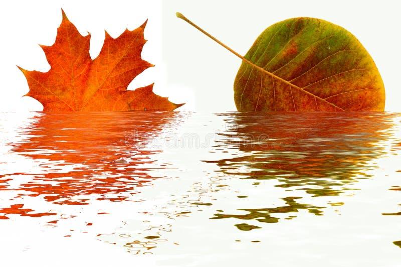 Reflexão das folhas de outono. fotografia de stock